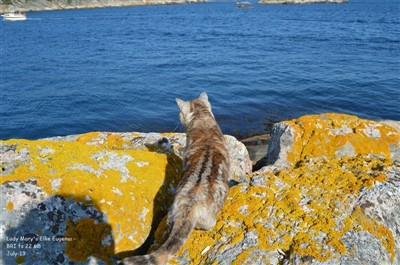 tortie silver tabby british shorthair cat at sea